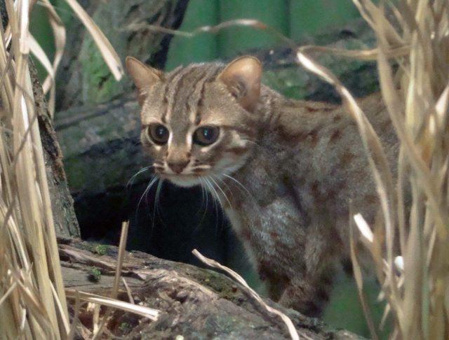 nejmenší kočička fotky