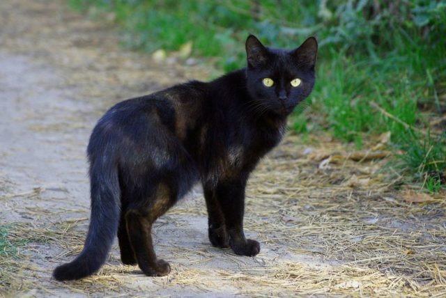 těsný kočička milf