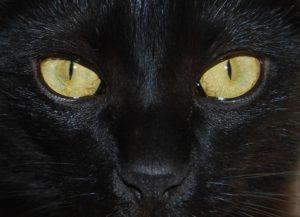 fotografie černých koček hot nahé dívky pic